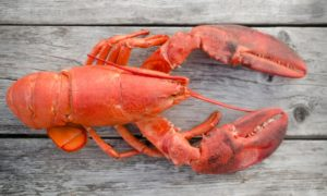maine lobster fall