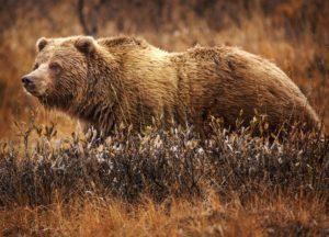 bear hiking trail
