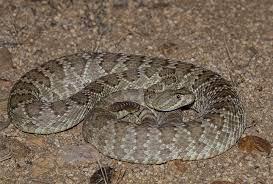 snake hiking